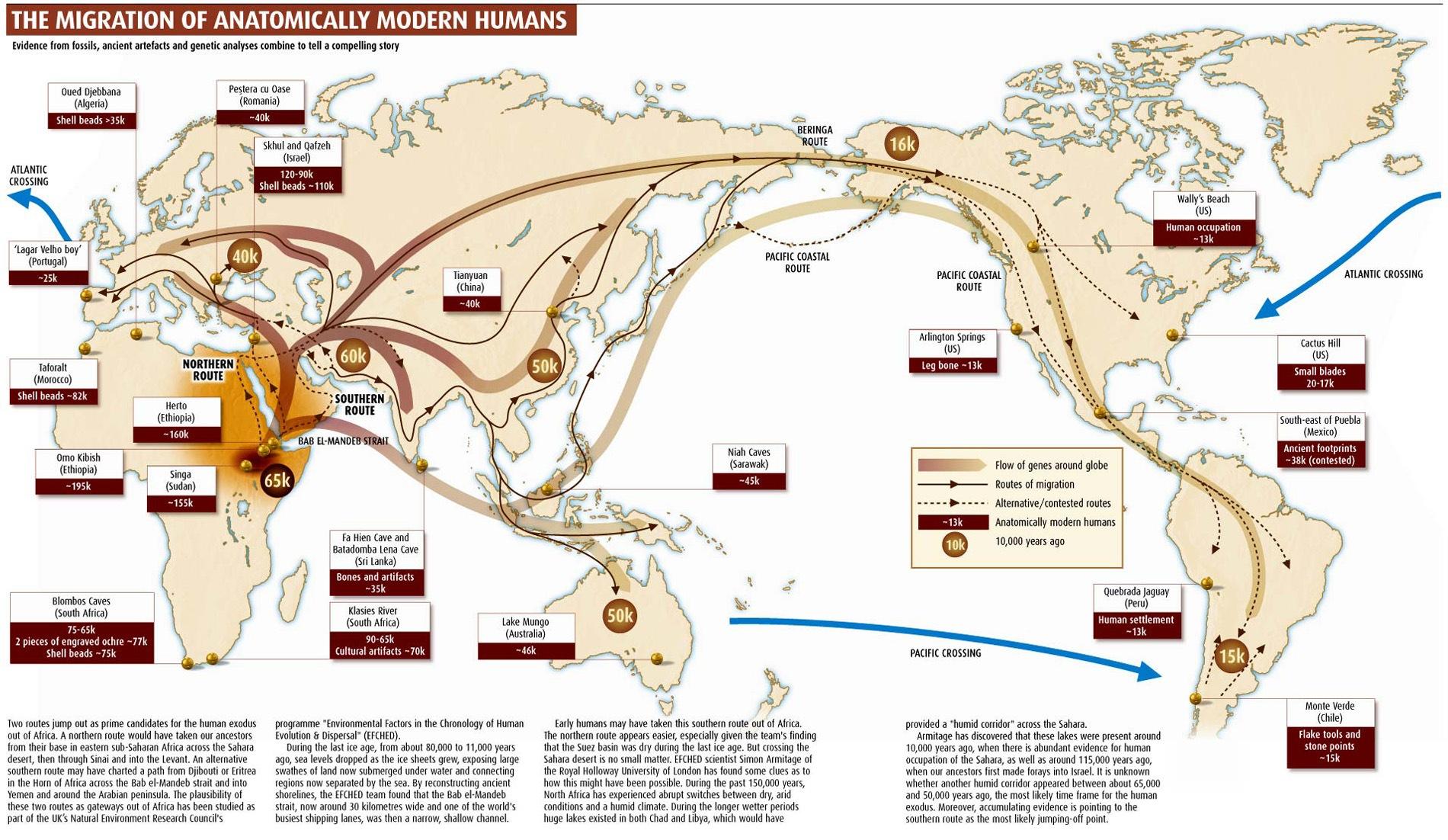 MigrationAnatomicallyModHumans1
